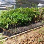 EMPARN implanta cultura de frutas no semiárido
