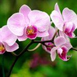Fest Orquídeas – Dias das Mães tem início nesta quinta-feira no Sam's Club