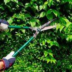 Ministério Público pede regularização de poda de árvores em Caicó